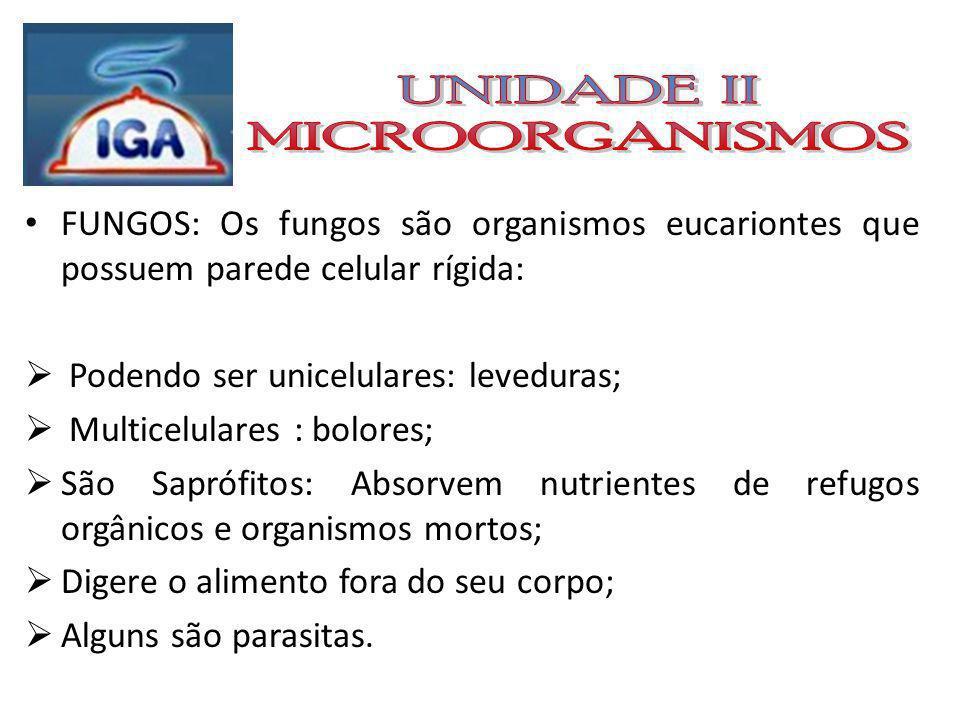 FUNGOS: Os fungos classificam-se em 4 grupos: Zygomycota: Mofo do pão; Ascomycota: Leveduras; trufas; mofos; Basidiomycota: Cogumelos; Deuteromycota (fungos imperfeitos): Mofos