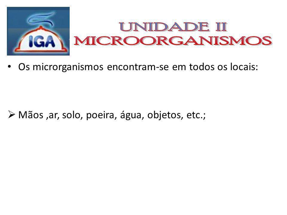 BACTÉRIAS: Células simples (unicelulares) que não possuem núcleo (procariontes)
