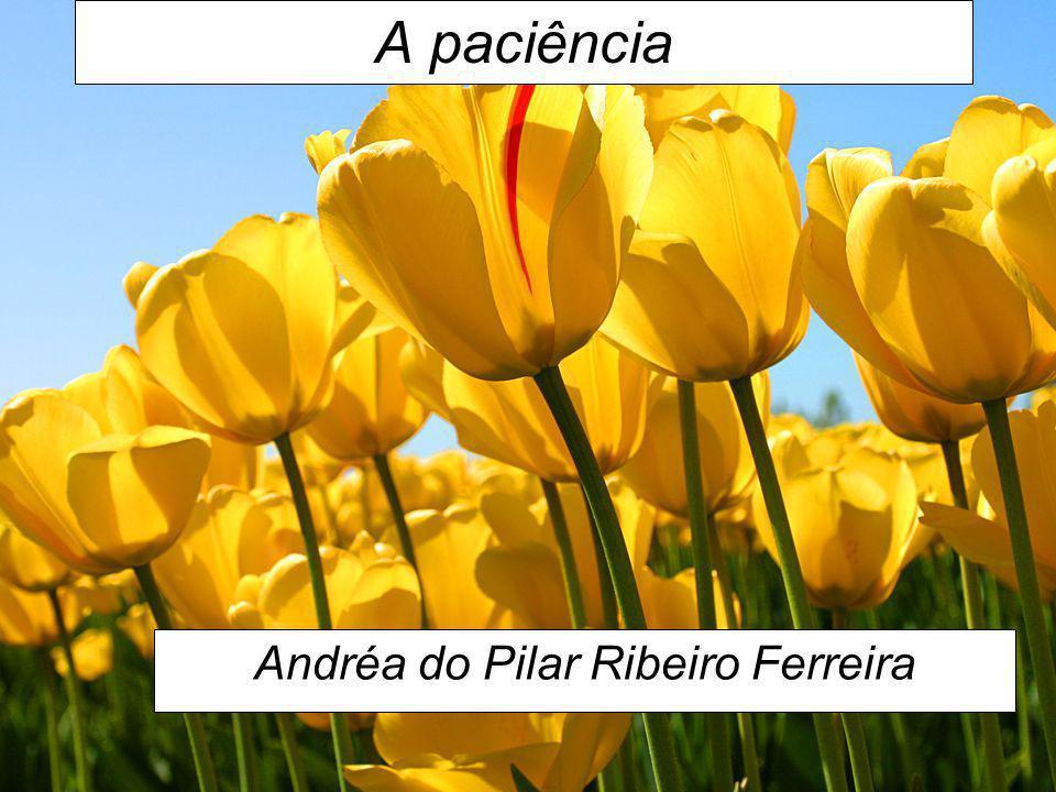 A paciência Andréa do Pilar Ribeiro Ferreira