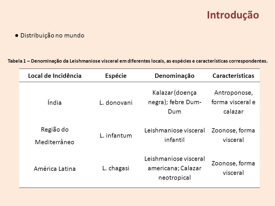 Introdução Distribuição no mundo Local de IncidênciaEspécieDenominaçãoCaracterísticas ÍndiaL. donovani Kalazar (doença negra); febre Dum- Dum Antropon