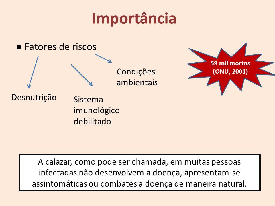 Fatores de riscos Desnutrição Sistema imunológico debilitado Condições ambientais 59 mil mortos (ONU, 2001) A calazar, como pode ser chamada, em muita