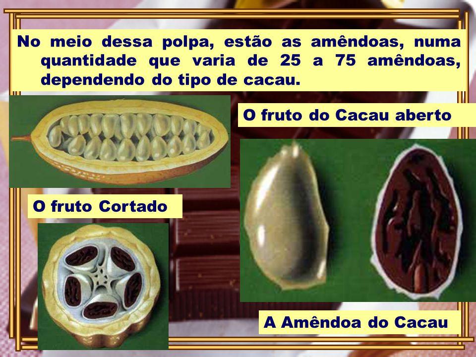 No meio dessa polpa, estão as amêndoas, numa quantidade que varia de 25 a 75 amêndoas, dependendo do tipo de cacau. O fruto do Cacau aberto A Amêndoa