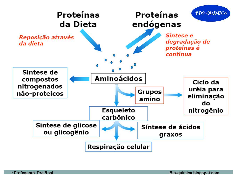 BIO-QUIMICA Professora Dra Rosi Bio-quimica.blogspot.com BIO-QUIMICA