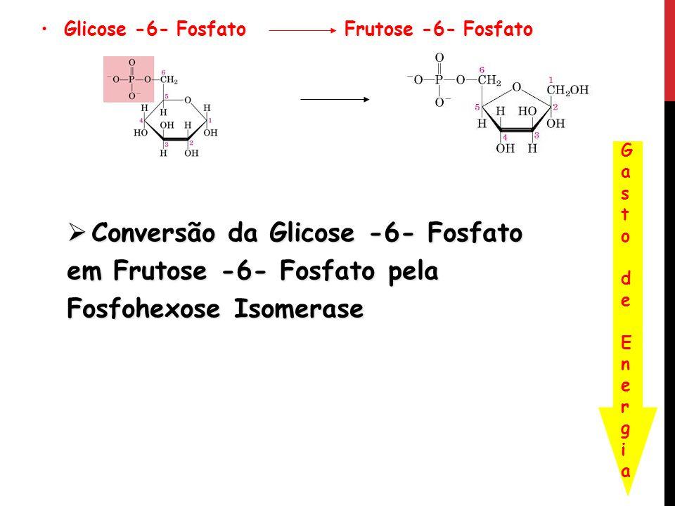 Glicose -6- Fosfato Frutose -6- Fosfato Glicose -6- Fosfato Frutose -6- Fosfato Conversão da Glicose -6- Fosfato em Frutose -6- Fosfato pela Fosfohexo