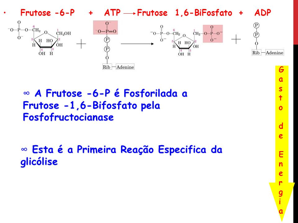 Frutose -6-P + ATP Frutose 1,6-BiFosfato + ADP Frutose -6-P + ATP Frutose 1,6-BiFosfato + ADP Gasto de EnergiaGasto de Energia A Frutose -6-P é Fosfor