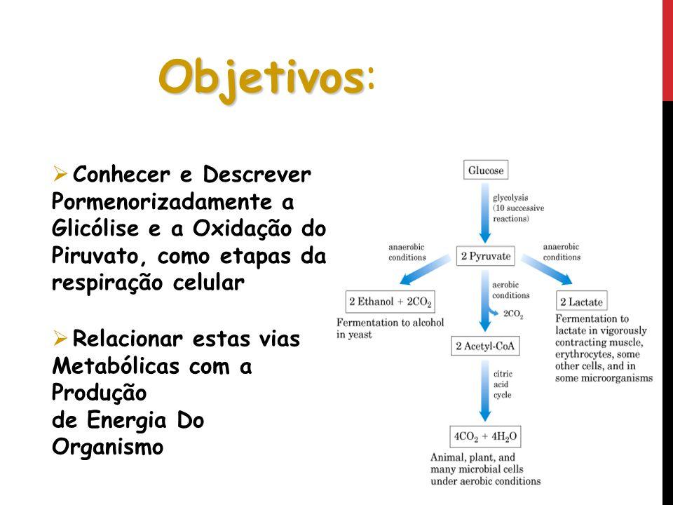 Objetivos Objetivos: Conhecer e Descrever Pormenorizadamente a Glicólise e a Oxidação do Piruvato, como etapas da respiração celular Relacionar estas