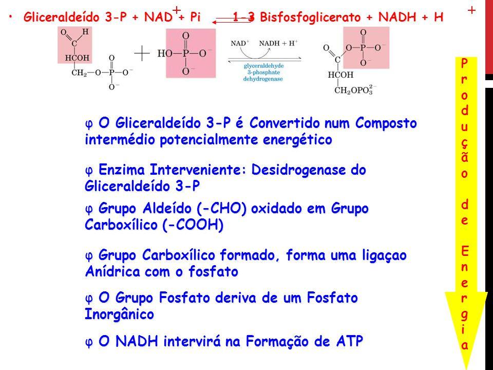 Gliceraldeído 3-P + NAD + Pi 1-3 Bisfosfoglicerato + NADH + H Gliceraldeído 3-P + NAD + Pi 1-3 Bisfosfoglicerato + NADH + H φ O Gliceraldeído 3-P é Co
