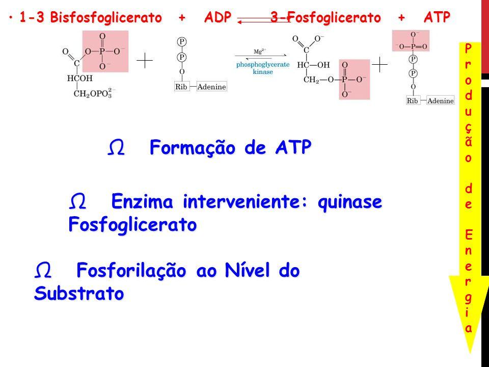 1-3 Bisfosfoglicerato + ADP 3-Fosfoglicerato + ATP 1-3 Bisfosfoglicerato + ADP 3-Fosfoglicerato + ATP Formação de ATP Formação de ATP Enzima interveni