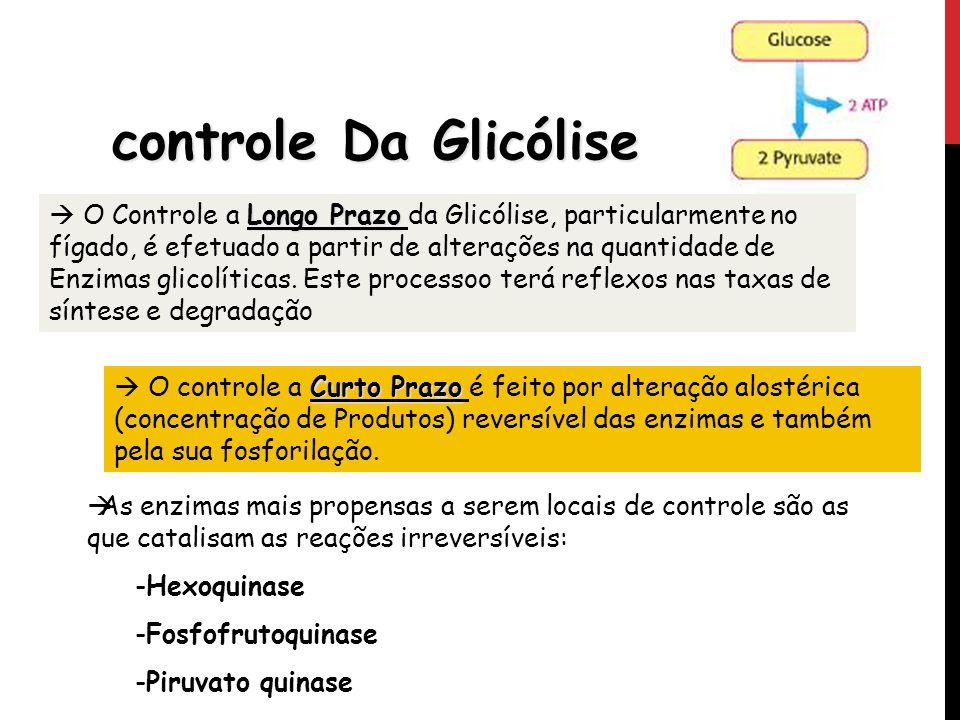 controle Da Glicólise Longo Prazo O Controle a Longo Prazo da Glicólise, particularmente no fígado, é efetuado a partir de alterações na quantidade de