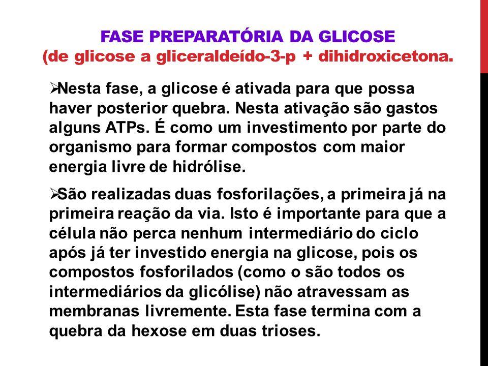 FASE PREPARATÓRIA DA GLICOSE (de glicose a gliceraldeído-3-p + dihidroxicetona. Nesta fase, a glicose é ativada para que possa haver posterior quebra.