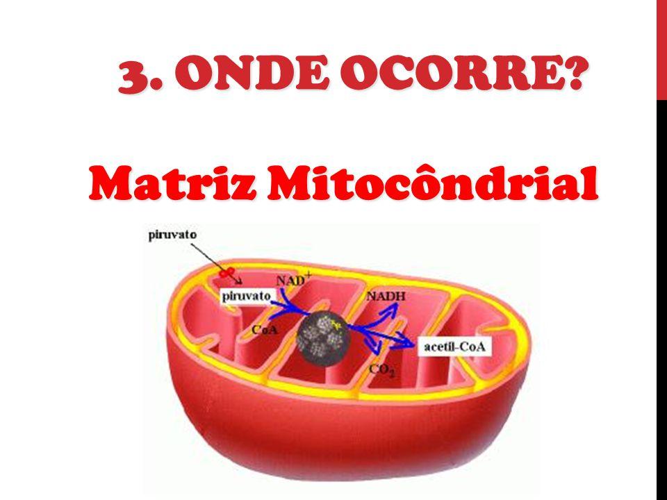 3. ONDE OCORRE? Matriz Mitocôndrial