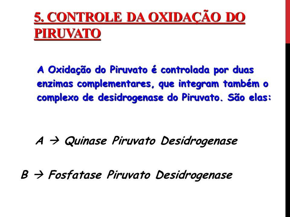 5. CONTROLE DA OXIDAÇÃO DO PIRUVATO A Oxidação do Piruvato é controlada por duas enzimas complementares, que integram também o complexo de desidrogena