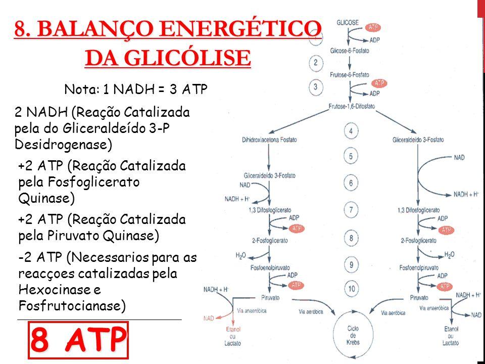 8. BALANÇO ENERGÉTICO DA GLICÓLISE Nota: 1 NADH = 3 ATP 2 NADH (Reação Catalizada pela do Gliceraldeído 3-P Desidrogenase) +2 ATP (Reação Catalizada p