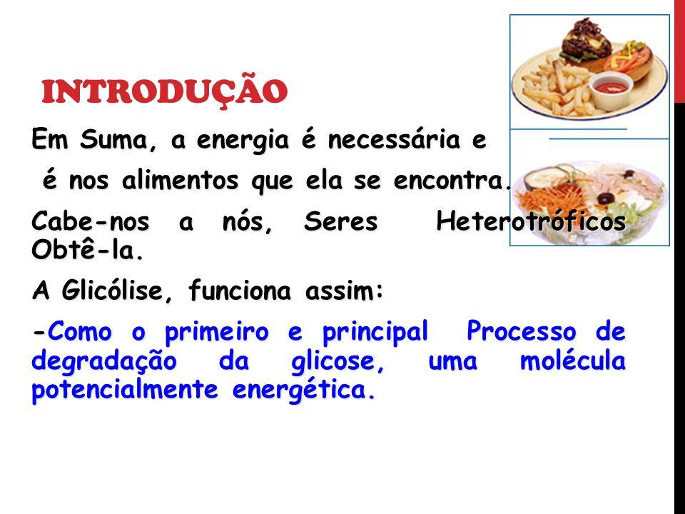 INTRODUÇÃO Em Suma, a energia é necessária e é nos alimentos que ela se encontra. é nos alimentos que ela se encontra. Cabe-nos a nós, Seres Heterotró