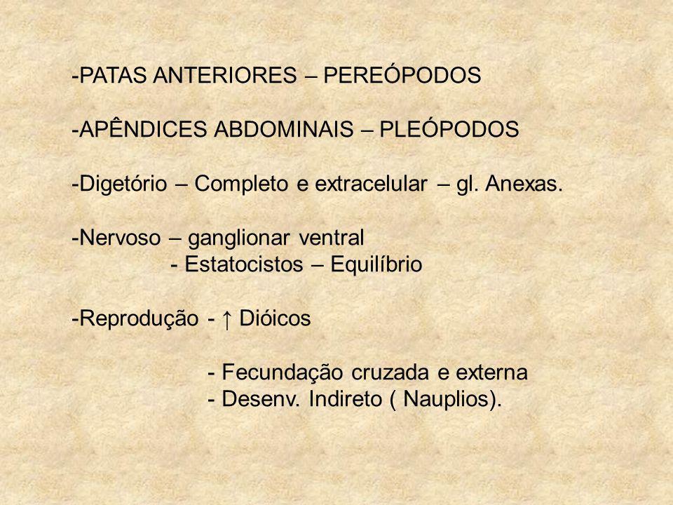 -PATAS ANTERIORES – PEREÓPODOS -APÊNDICES ABDOMINAIS – PLEÓPODOS -Digetório – Completo e extracelular – gl. Anexas. -Nervoso – ganglionar ventral - Es