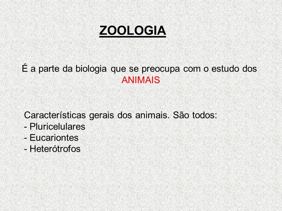 ZOOLOGIA É a parte da biologia que se preocupa com o estudo dos ANIMAIS Características gerais dos animais. São todos: - Pluricelulares - Eucariontes