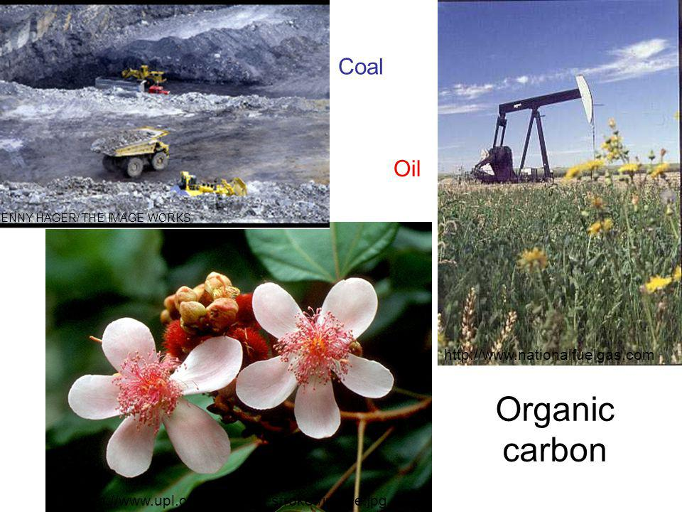 http://www.nationalfuelgas.com http://www.upl.cs.wisc.edu/~stroker/jungle.jpg JENNY HAGER/ THE IMAGE WORKS Organic carbon Coal Oil