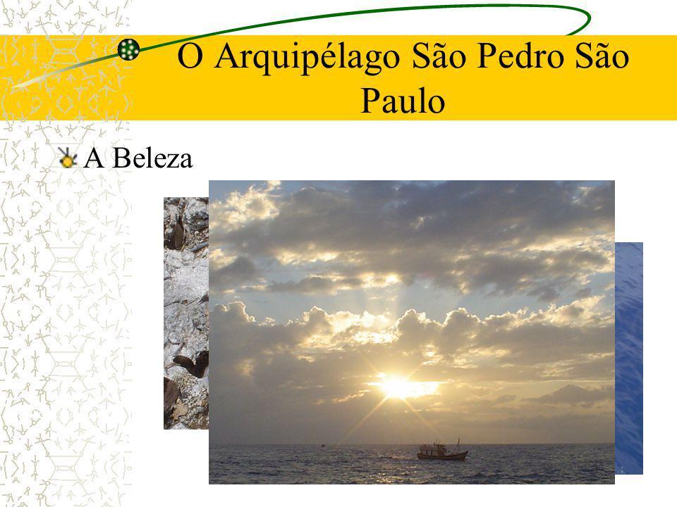 O Arquipélago São Pedro São Paulo A Beleza