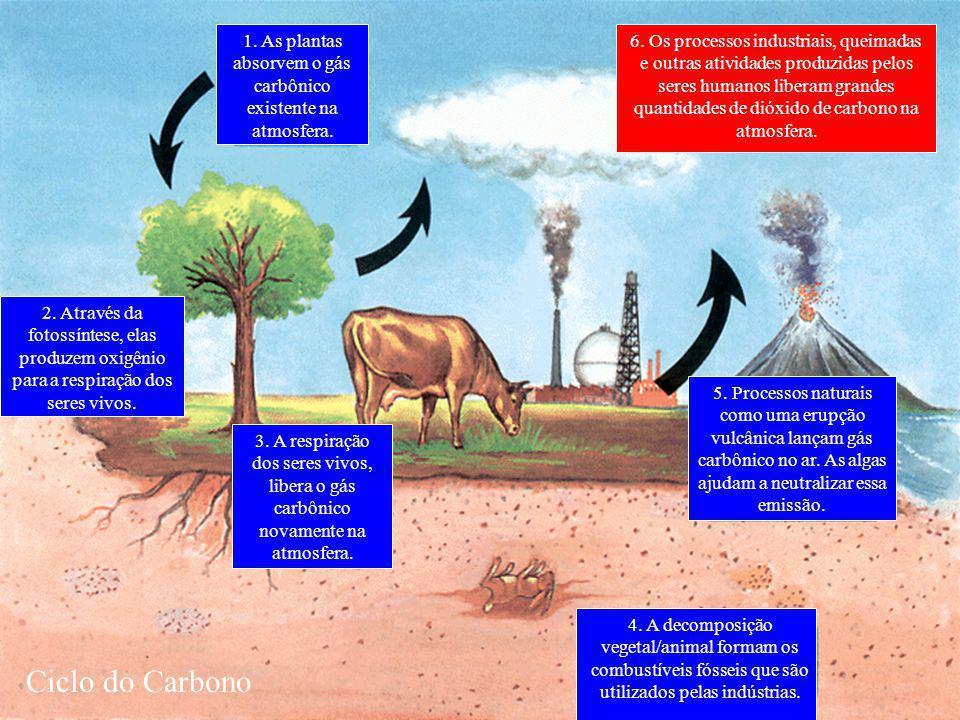 1.As plantas absorvem o gás carbônico existente na atmosfera.