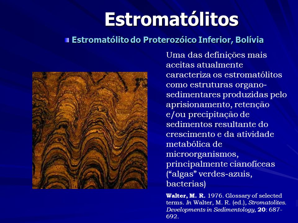 Estromatólitos Estromatólito do Proterozóico Inferior, Bolívia Uma das definições mais aceitas atualmente caracteriza os estromatólitos como estruturas organo- sedimentares produzidas pelo aprisionamento, retenção e/ou precipitação de sedimentos resultante do crescimento e da atividade metabólica de microorganismos, principalmente cianofíceas (algas verdes-azuis, bacterias) Walter, M.
