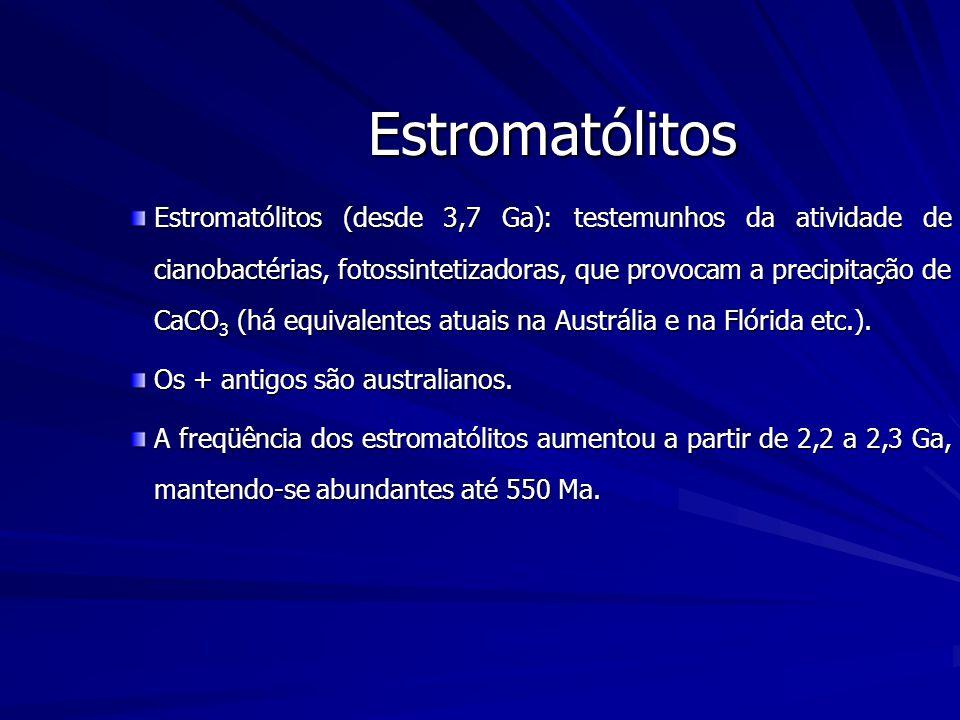 Estromatólitos Estromatólitos (desde 3,7 Ga): testemunhos da atividade de cianobactérias, fotossintetizadoras, que provocam a precipitação de CaCO 3 (há equivalentes atuais na Austrália e na Flórida etc.).
