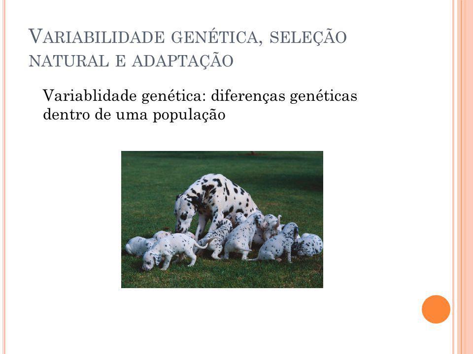 V ARIABILIDADE GENÉTICA, SELEÇÃO NATURAL E ADAPTAÇÃO Variablidade genética: diferenças genéticas dentro de uma população