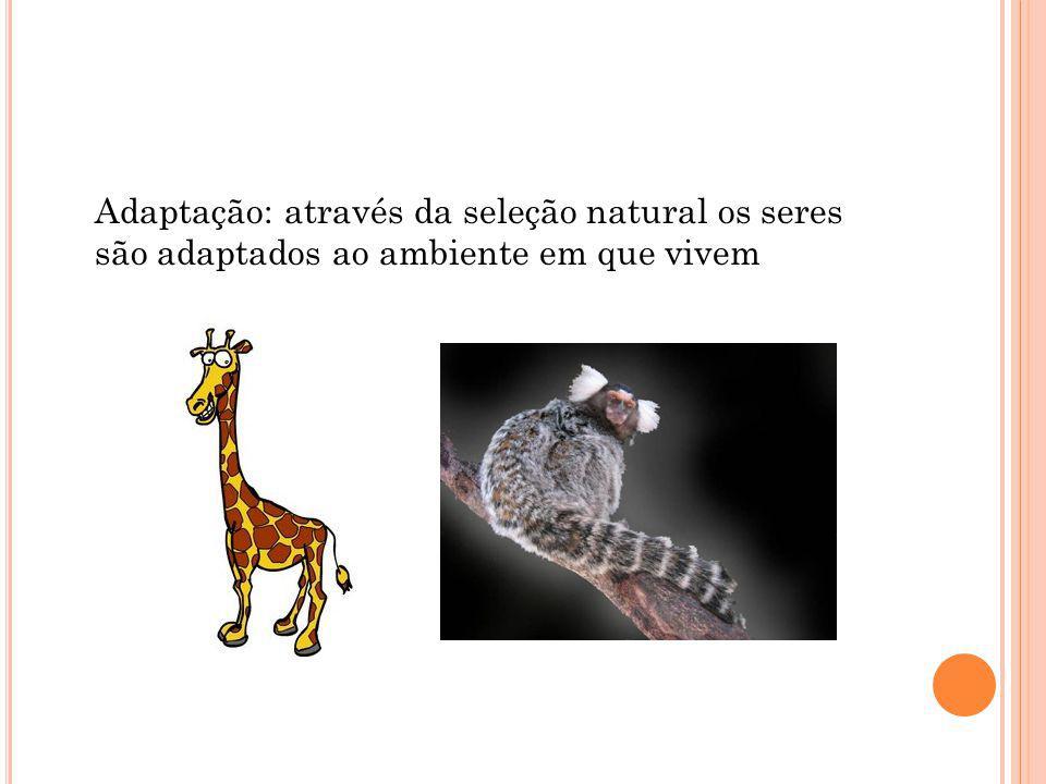 Adaptação: através da seleção natural os seres são adaptados ao ambiente em que vivem