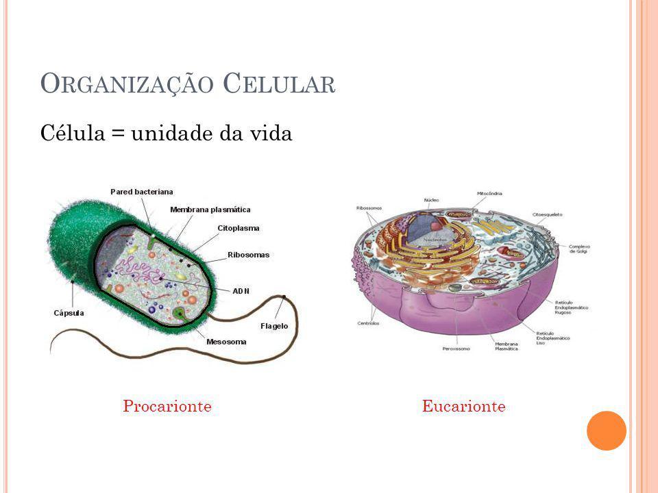 O RGANIZAÇÃO C ELULAR Célula = unidade da vida Procarionte Eucarionte