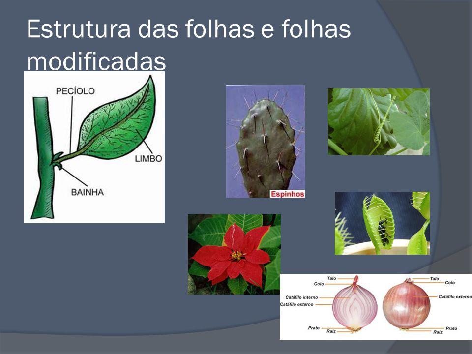 Orgãos Reprodutivos A flor Formada de partes férteis e não férteis.