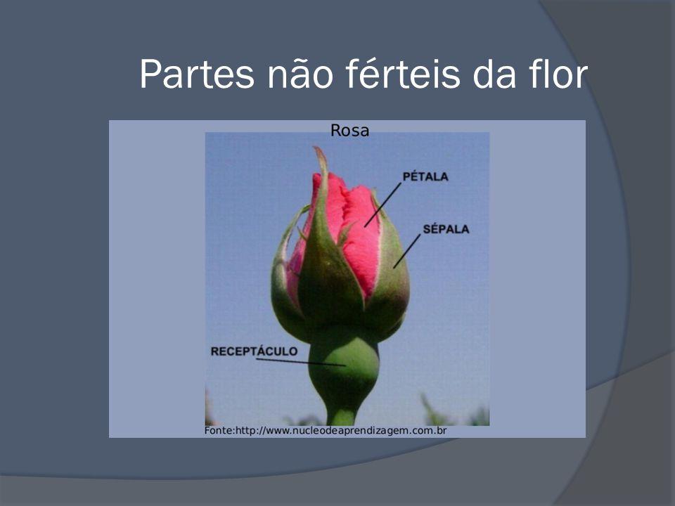 Partes férteis da flor
