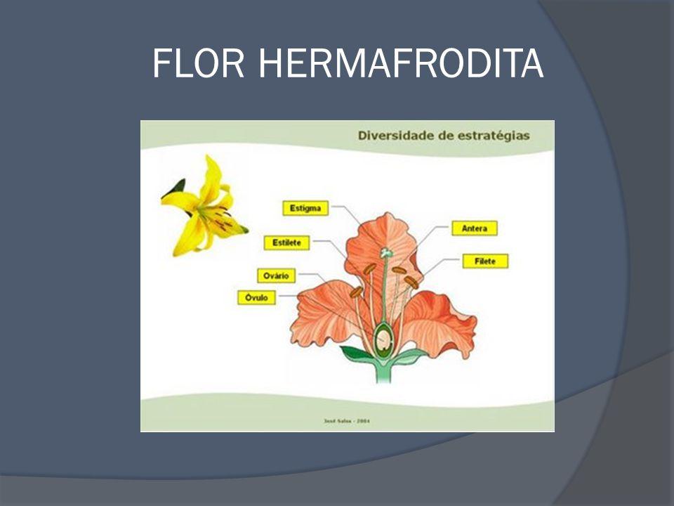 Reprodução das angiospermas Ver música: Vai Androceu (Equipe Bio) disponível em: www.bioarquivos.blogspot.com