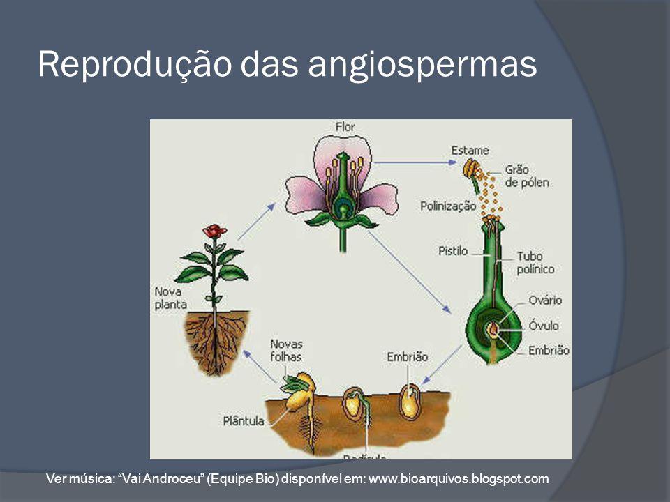 Polinização É a transferência dos grãos de pólen da antera para o estigma da flor.