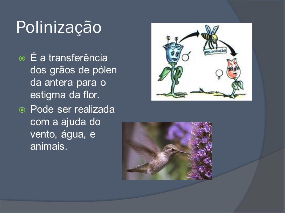 O Fruto Os frutos são estruturas que protegem as sementes nas Angiospermas.