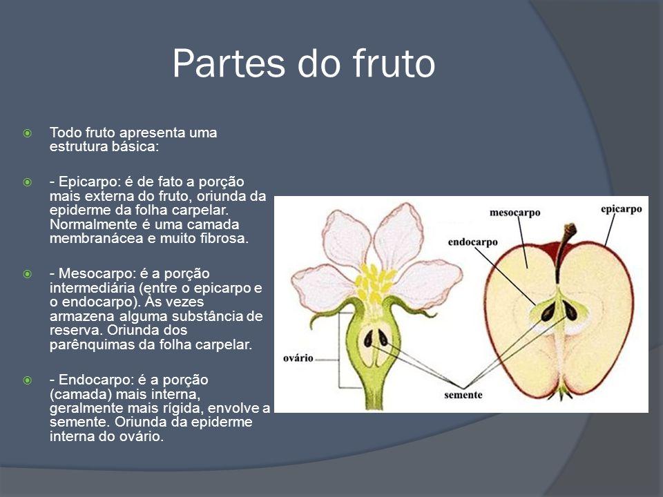 Tipos de fruto Frutos simples: são frutos oriundos do desenvolvimento do pedúnculo ou do receptáculo de uma única flor.