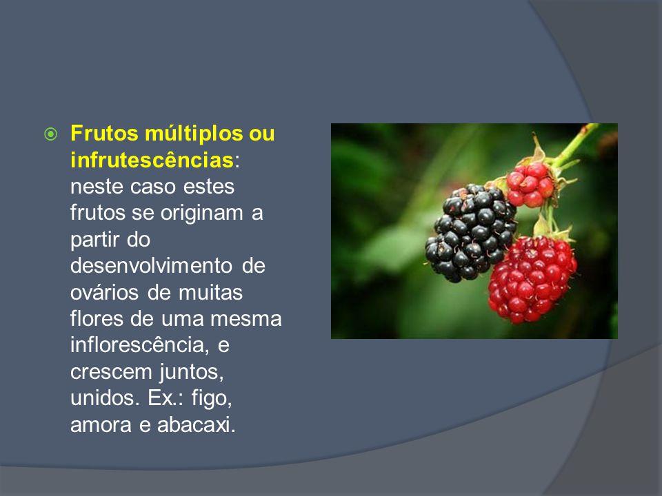 Tipos de Fruto Carnosos: polpa macia e suculenta.Ex: melancia, mamão, manga, goiaba, laranja...