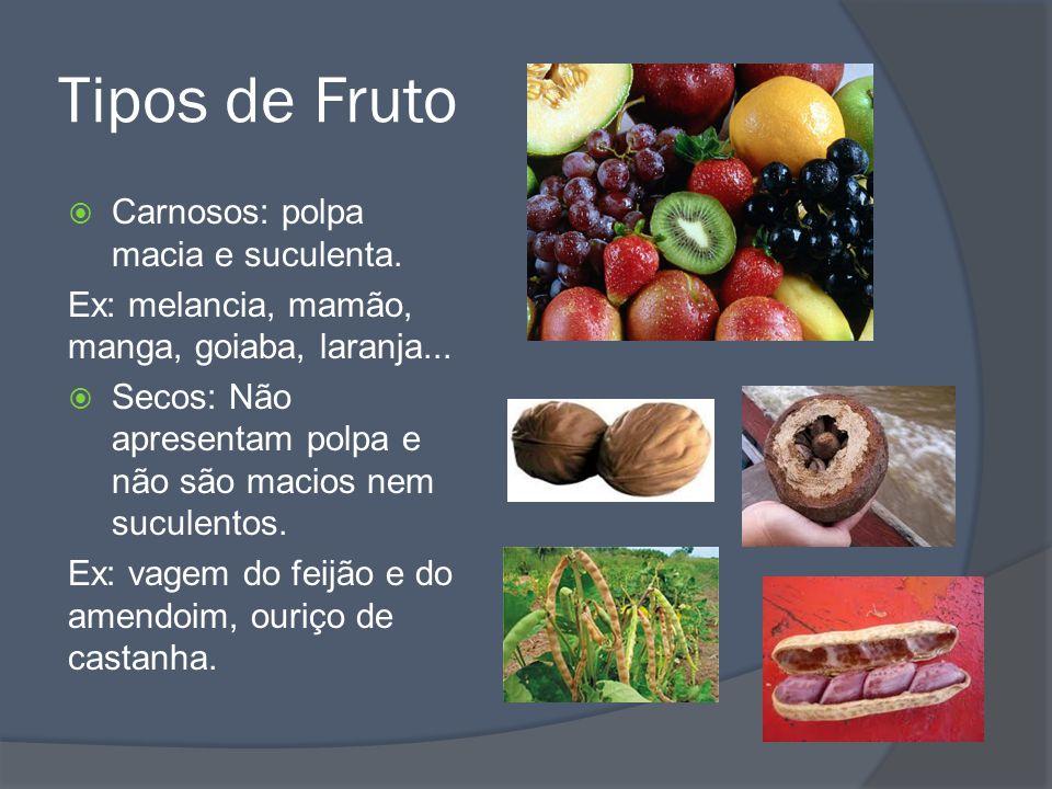 Frutos (frutos falsos) Quando o fruto não se desenvolve a partir do ovário da flor.