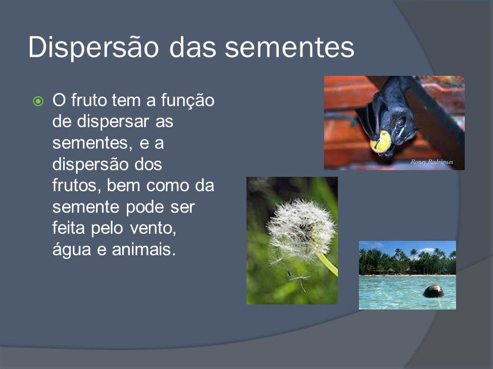 Dispersão das sementes O fruto tem a função de dispersar as sementes, e a dispersão dos frutos, bem como da semente pode ser feita pelo vento, água e animais.