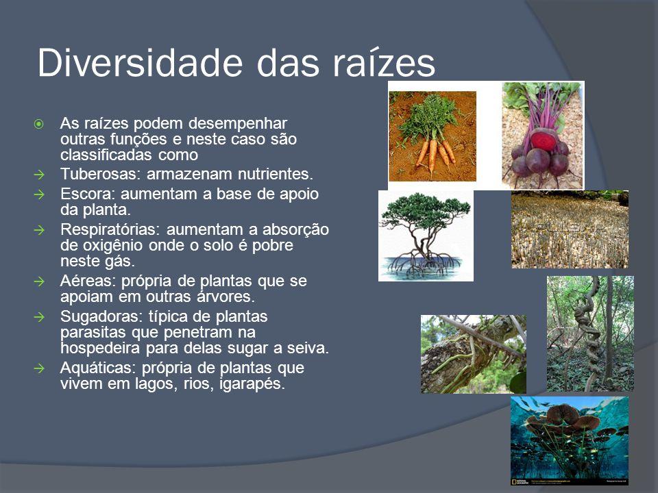 Orgãos vegetativos Caule Funções: Apoiar e servir de suporte para o desenvolvimento de outras folhas e ramos e CONDUZIR os nutrientes para todas as partes da planta.