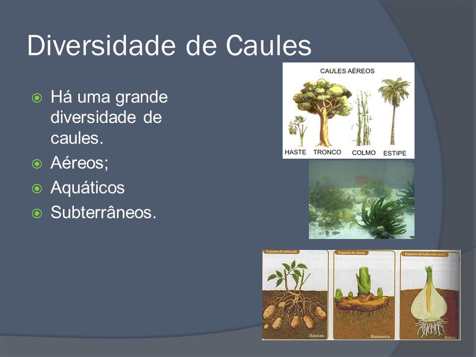 Orgãos vegetativos Folha Funções: Fotossíntese (produção de glicose) Respiração (troca de gases) Transpiração (perda de vapor de água)