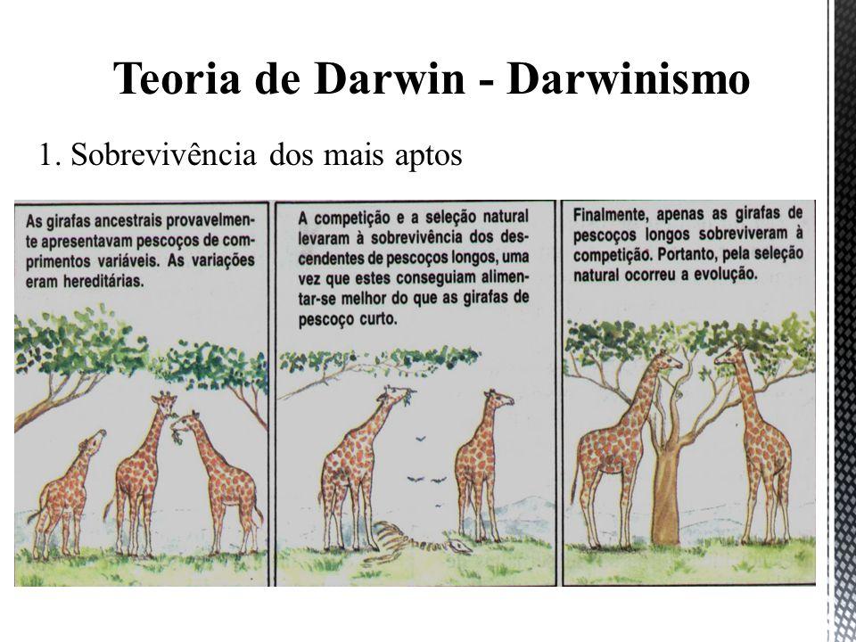 1. Sobrevivência dos mais aptos Teoria de Darwin - Darwinismo