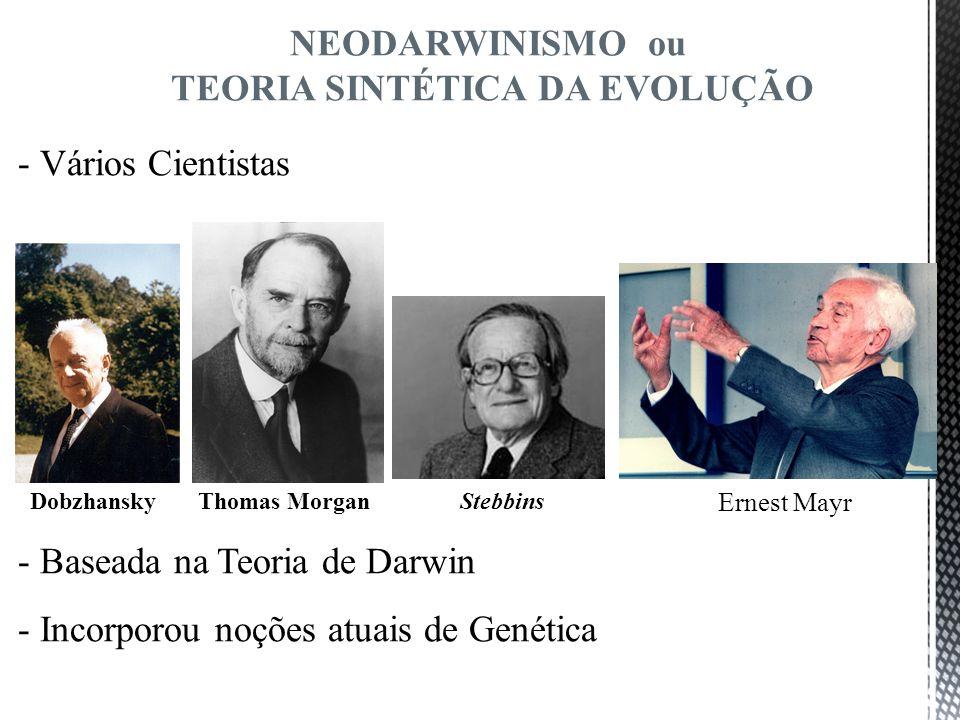 - Vários Cientistas Dobzhansky Thomas Morgan Stebbins - Baseada na Teoria de Darwin - Incorporou noções atuais de Genética NEODARWINISMO ou TEORIA SIN