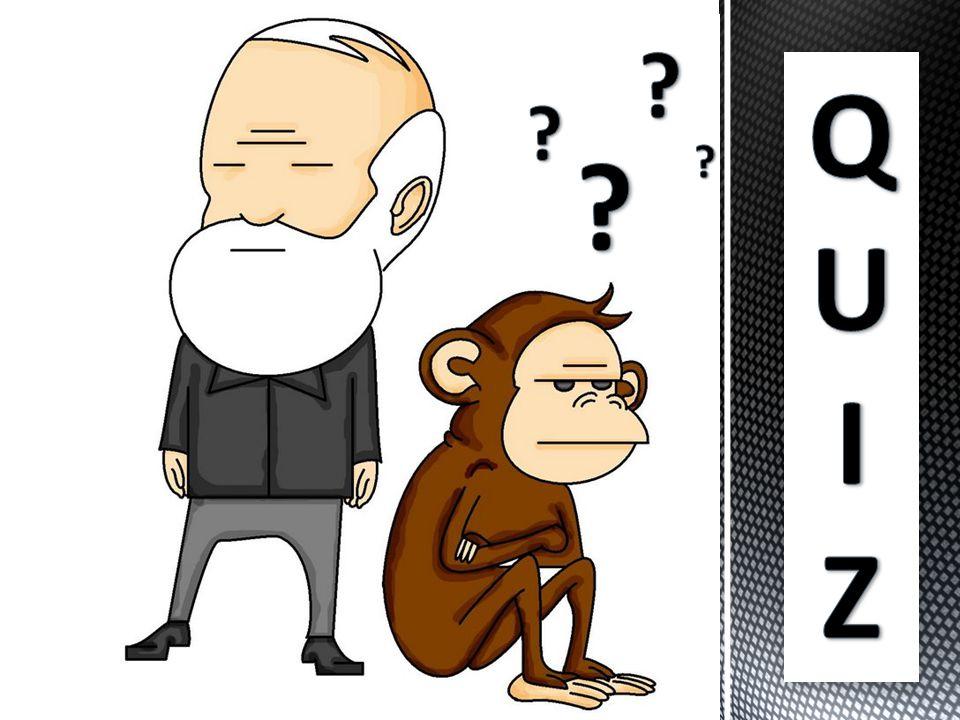 De onde se originou a primeira idéia de criacionismo.