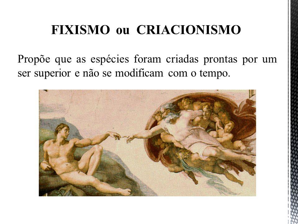 FIXISMO ou CRIACIONISMO Propõe que as espécies foram criadas prontas por um ser superior e não se modificam com o tempo.