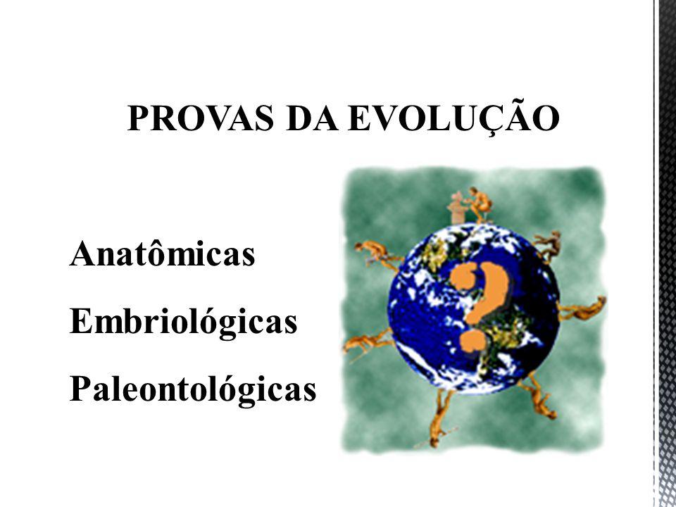 PROVAS DA EVOLUÇÃO Anatômicas Embriológicas Paleontológicas