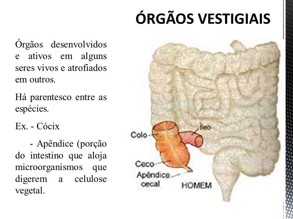 Órgãos desenvolvidos e ativos em alguns seres vivos e atrofiados em outros. Há parentesco entre as espécies. Ex. - Cócix - Apêndice (porção do intesti