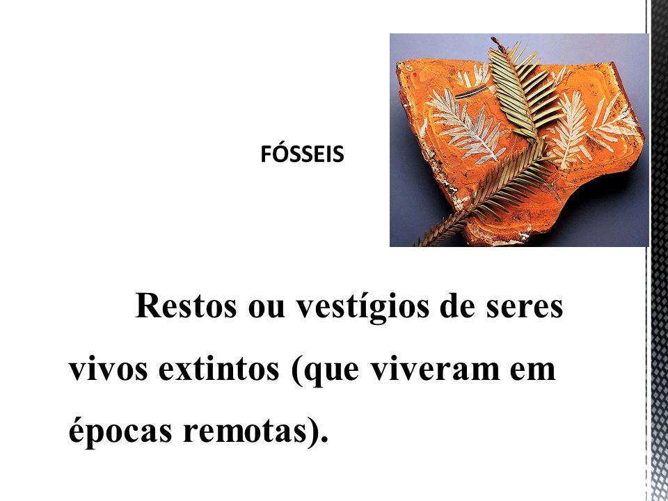 Restos ou vestígios de seres vivos extintos (que viveram em épocas remotas).