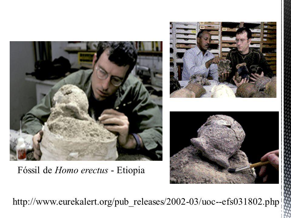 http://www.eurekalert.org/pub_releases/2002-03/uoc--efs031802.php Fóssil de Homo erectus - Etiopia