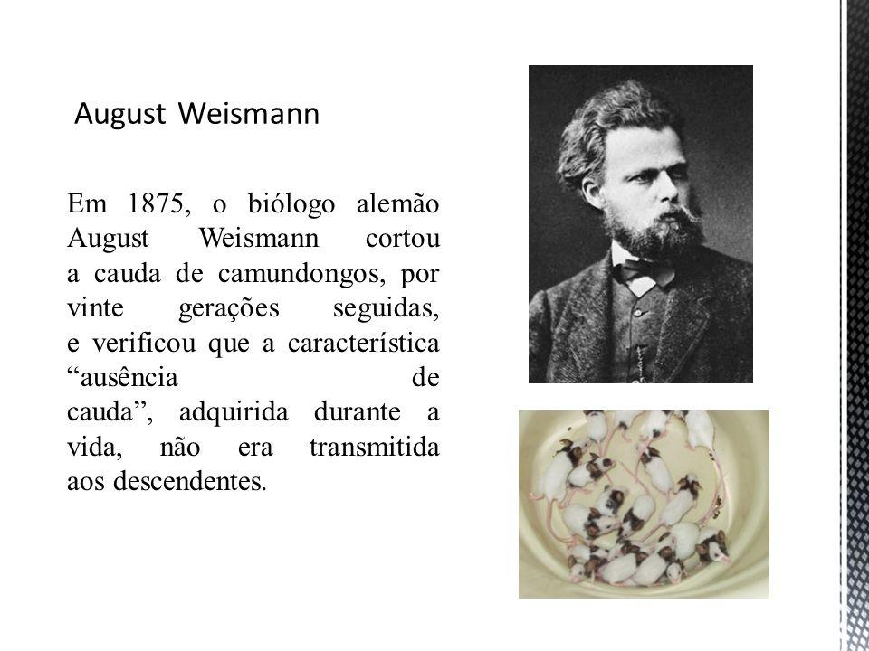 Em 1875, o biólogo alemão August Weismann cortou a cauda de camundongos, por vinte gerações seguidas, e verificou que a característica ausência de cau
