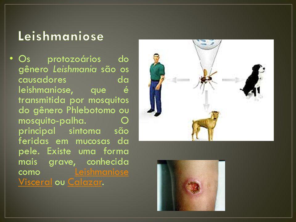 Os protozoários do gênero Leishmania são os causadores da leishmaniose, que é transmitida por mosquitos do gênero Phlebotomo ou mosquito-palha.