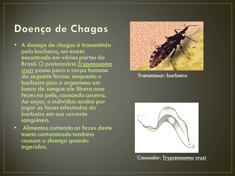 A doença de chagas é transmitida pelo barbeiro, um inseto encontrado em várias partes do Brasil.